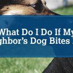 Bit By Dog Lawsuit